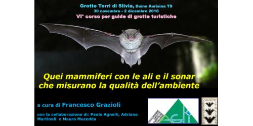 Quei mammiferi con le ali e il sonar - Francesco Grazioli
